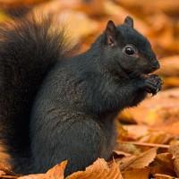 UMass Squirrel